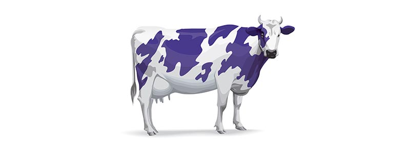 Recruit More Drivers with Your Purple Cow